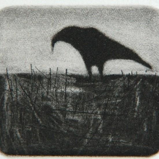 kyla-cresswell-mr-crow