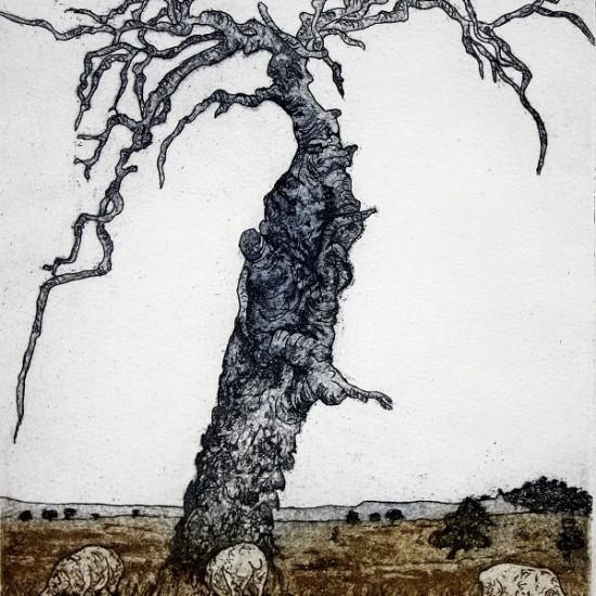 kevin-foley-dirawong-tree