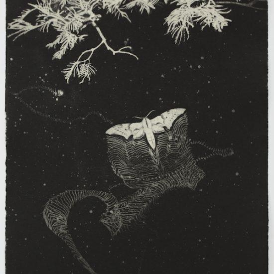 kasia-fabijanska-night-walk-2-hawk-moth