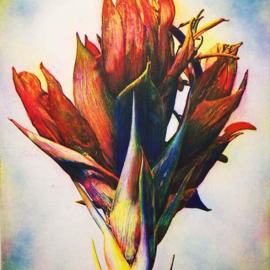tony-ameneiro-flame-lily-gymea-lily