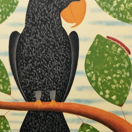 dean-bowen-black-parrot-watching-millepede