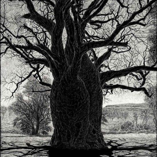 boab-tree-near-wyndham-engraving-rachel-newling