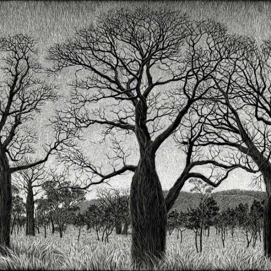 kimberley-boab-tree-landscape-engraving-rachel-newling-engraving (1)