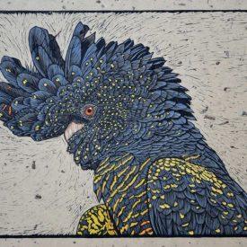 ed-tailed-black-cockatoo-portrait-linocut-rachel-newling